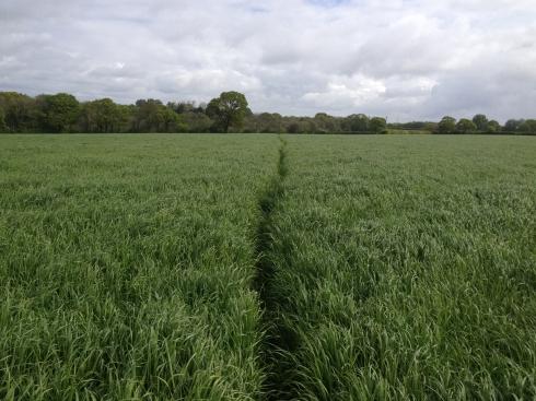 The Weald Walk, East Hoathly